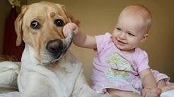 Vauvat Nauraa Hysteerisesti Koiria. Kokoelma [Uusi Hd]