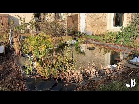 Permaculture : suivi du bassin de jardin (4/4) - Jardinerie Truffaut TV