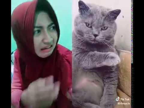 Tik tok kentut bikin kucing cengo... ( Subcribe and like gk bayar)