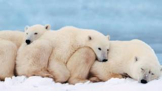 животный мир Севера