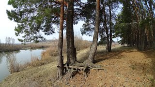Дикая природа, весна 2020, река Мокша, Шаверки, лес
