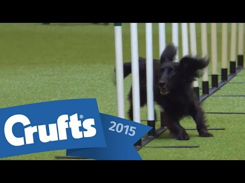 Agility - Crufts Singles Final: Small, Medium and Large | Crufts 2015