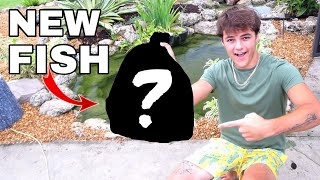 PURCHASING 6 *NEW* KOI FISH for My POND!!