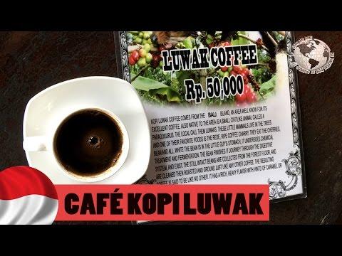 Kopi Luwak, el café más caro del mundo, Bali. Indonesia 2016