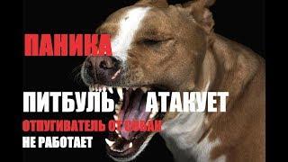 питбуль Атакует-Отпугиватель от Собак не Работает