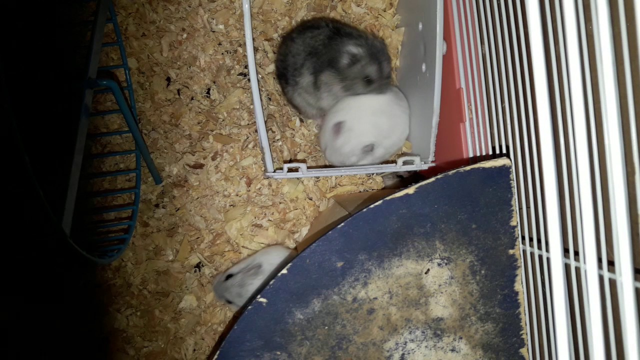 Hamster Porn Youtube