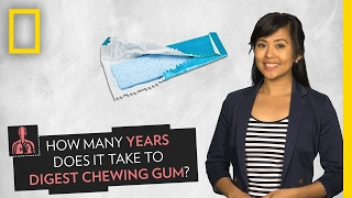 How Long Does It Take to Digest Chewing Gum? | Pop Quiz