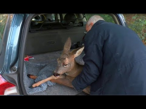 Rescue Worker Pulls Over And Risks Everything To Try And Save A Desperate Animal