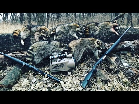 Daytime Coon Hunting In Kansas