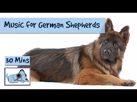 Music for German Shepherds or Alsatian Dogs 🐶 #GERMANSHEP01
