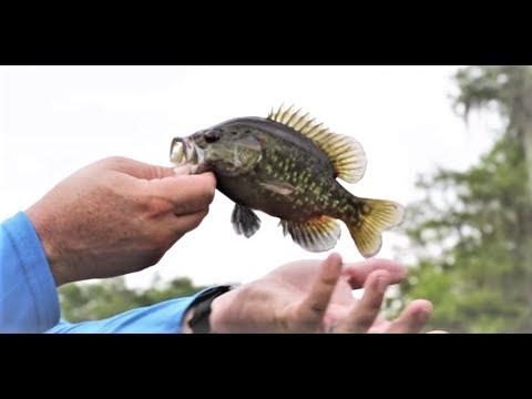 Fishing Goggleye In The Atchafalya Basin  Sportsman TV