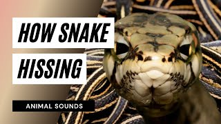The Animal Sounds: Snake Sound Effects - Animation
