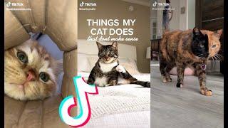 BEST CAT TIKTOKS! #1