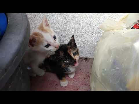 Cute 3 Kittens Meowing & Playing With Stranger