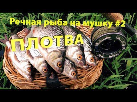 Речная рыба на мушку #2. Ловля весенней плотвы.