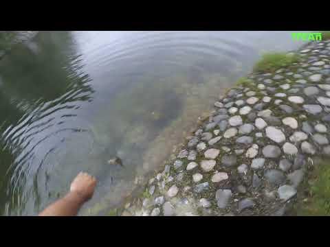 """Железноводск, выходые, спиннинг и """"Декоративное озеро"""""""