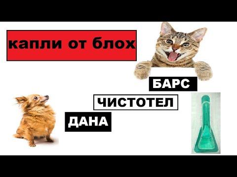Капли от блох для кошек и собак  Барс, чистотел, дана и другие  Эффективность
