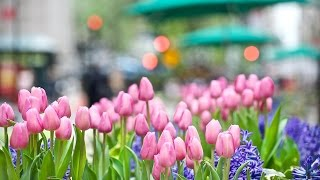 大石まどか - 春待ち花