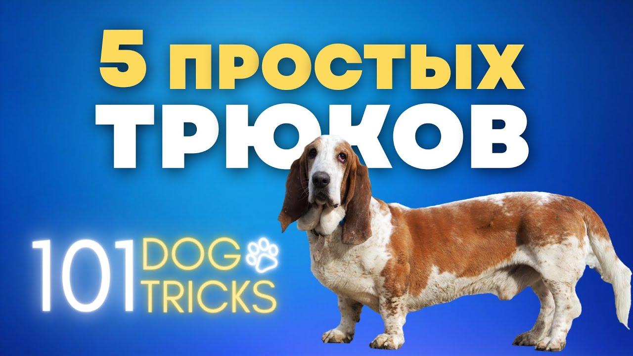 5 простых трюков которые сможет любая собака ? Трюковая дрессировка ? Трюки для всех пород собак ?
