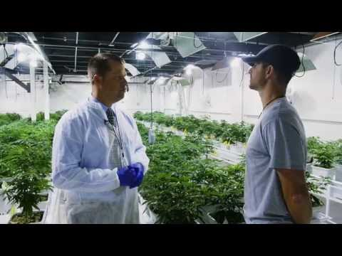 Mayor's Report - NETA Medical Marijuana Growing Facility and Dispensary