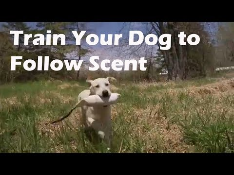 Teach Your Dog to Follow a Scent Trail