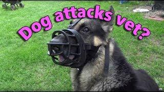 Dog attacks veterinarian? Vet doesn't like it?