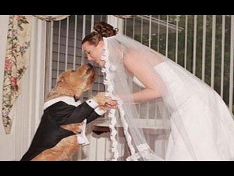 نتيجة بحث الصور عن فتاة أمريكية تتزوج من كلبها