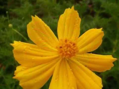 รูปดอกไม้จากกล้อง Fuji Finepix s2980