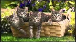 Картинки под музыку котята
