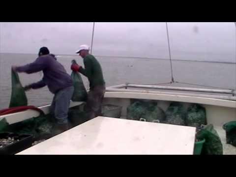 NJ DEP raids oyster farm, dumps 600,000 oysters overboard