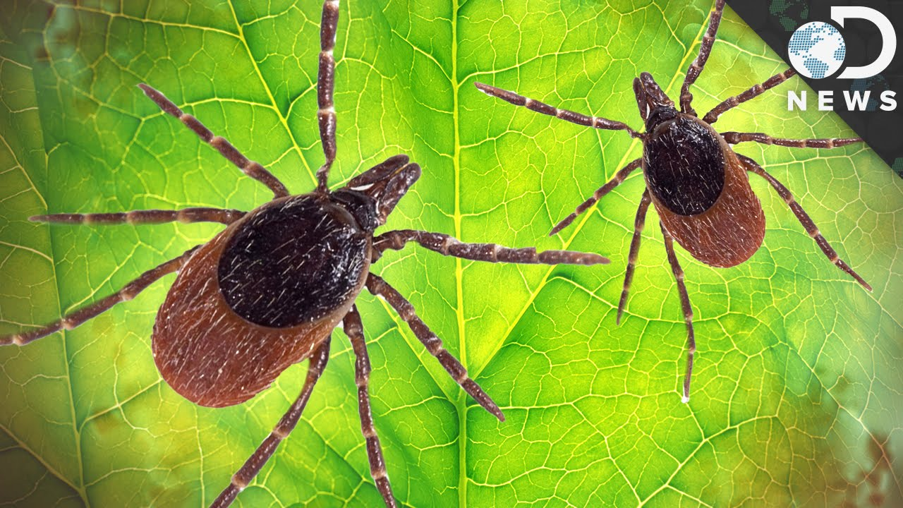 A Bacterial Protein That Powers Lyme Disease | Microbiology