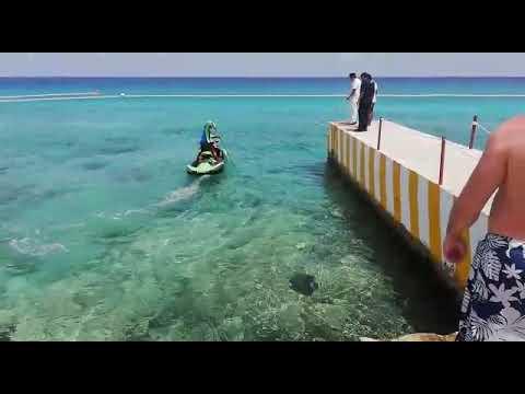 Cocodrilo en la playa de Cozumel