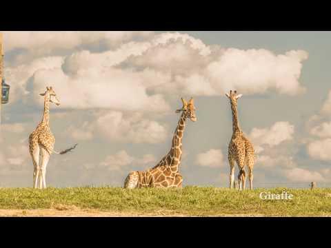 The Wilds - Cumberland Ohio - Open Air Safari