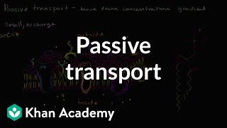 Passive Transport And Selective Permeability