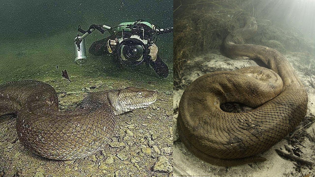 10 การค้นพบที่น่าตกใจ..ของเหล่านักดำน้ำในทะเลลึก
