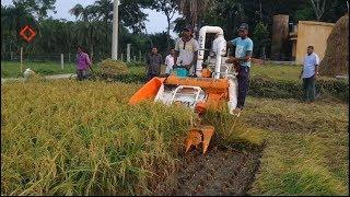 Combine harvester: Rice harvesting, threshing, packing together(ধান কাটা,মাড়াই,বস্তাবন্দি একসাথে)