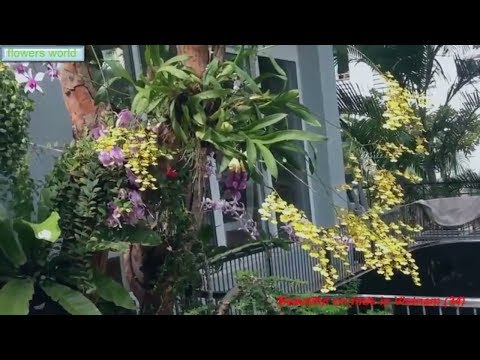 Beautiful orchids in Vietnam (34)|Beautiful garden space.