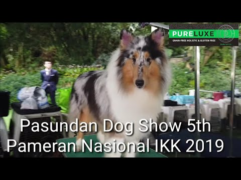 Pameran Anjing : Pasundan Dog Show 5th & Pameran Nasional IKK 2019
