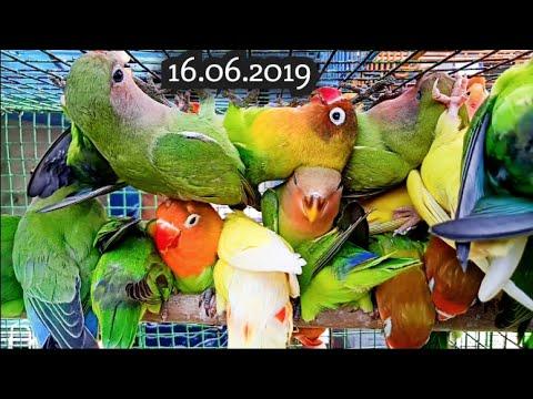 Kolkata Bird Market At Galiff Street Visit 16th June 2019  The Largest Bird Market In Asia