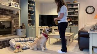 Dog Tricks With Nala M.
