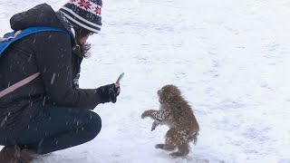 【SNOW MONKEY】 ☆Cute Baby☆ First Snow Life 6 地獄谷野猿公苑