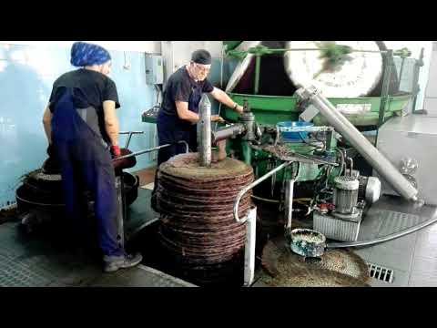 Abrantes/Mouriscas - A desafiante rotina de um lagar à moda antiga