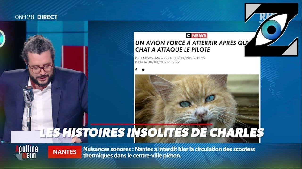 Download [Zap Actu] François Hollande et Samuel Etienne sur Twitch, Attaque de chat sur un pilote (10/03/21)