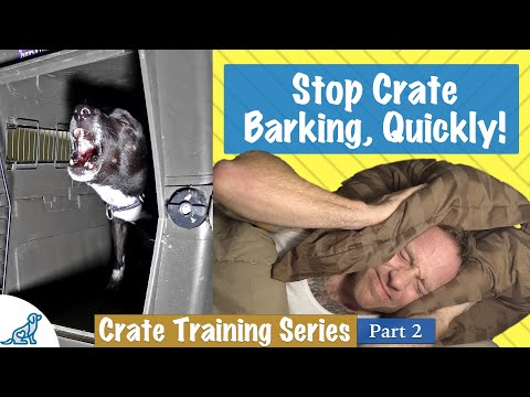how-to-stop-your-dog-barking-in-crate-at-night---professional-dog-training-tips