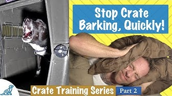 How To Stop Your Dog From Barking In Their Crate At Night