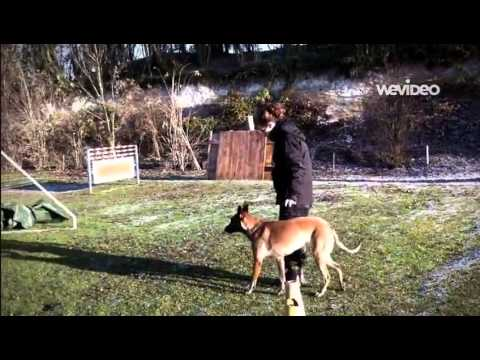 Formation de maître chien au Cercle Cynophile de Saint