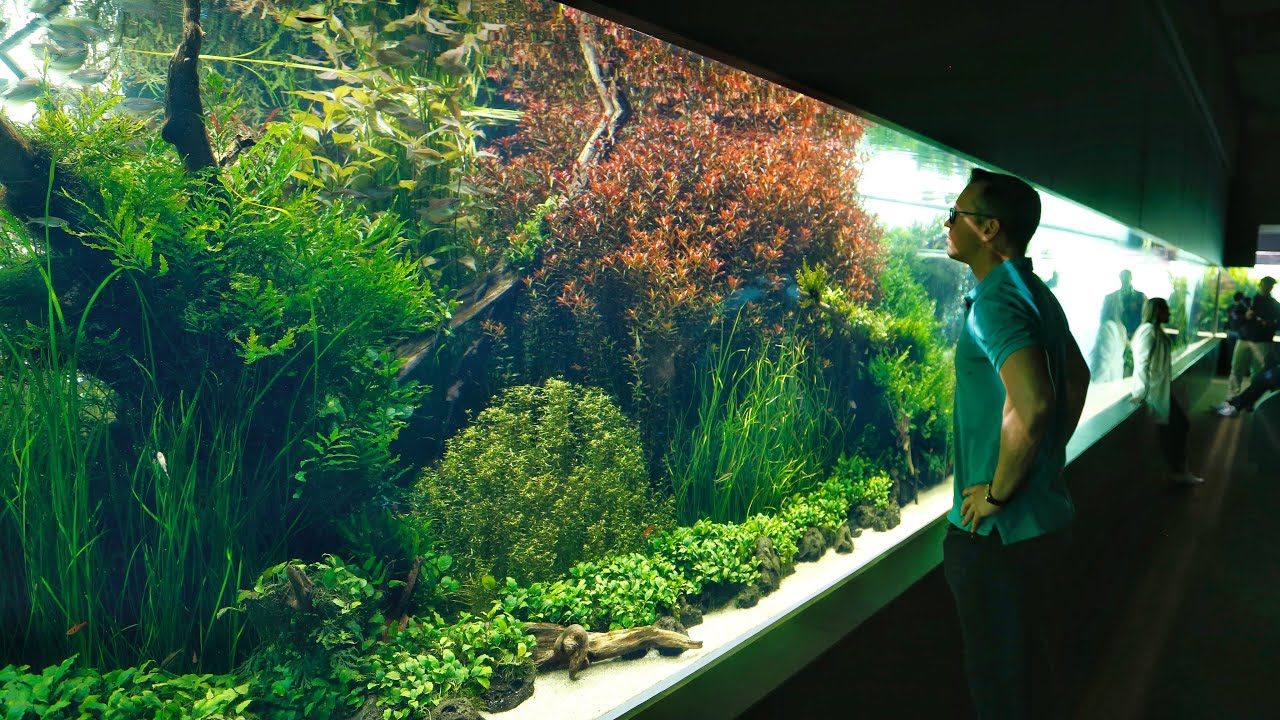 The World S Biggest And Best Aquascape Emotional Youtube