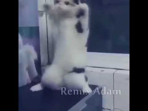 remix adam bu hayatın heyecanı yok kedi versiyonu