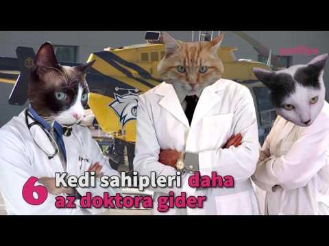 """""""Herkesin Hayatında Bir Kediye Sahip Olması Gerektiğinin 16 Bilimsel Kanıtı"""""""