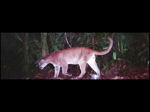 Reserva de vida silvestres el Pambilar